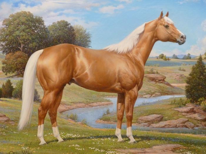 caballo-palomino-web1